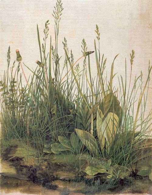 Great Piece of Turf by Albrecht Durer