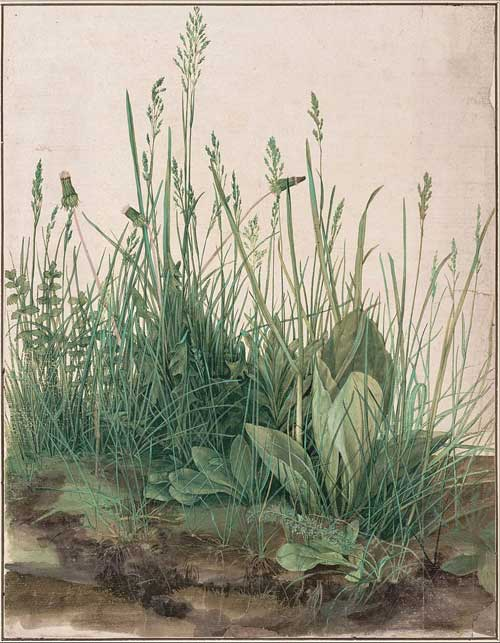 The Large Piece of Turf by Albrecht Durer